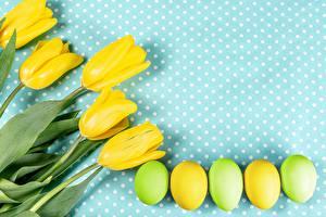 Hintergrundbilder Tulpen Ostern Eier Gelb Blüte Lebensmittel