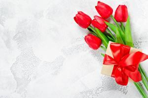 Fotos Tulpen Geschenke Vorlage Grußkarte Blumen