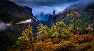 Wallpaper USA Forest Mountain California Trees Yosemite Sierra Nevada Nature