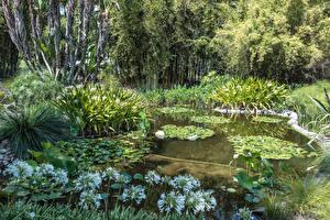 Fotos Vereinigte Staaten Garten Teich Seerosen Kalifornien Strauch Botanical Gardens in San Marino