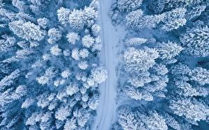 Hintergrundbilder Winter Wald Straße Von oben Schnee Bäume Natur