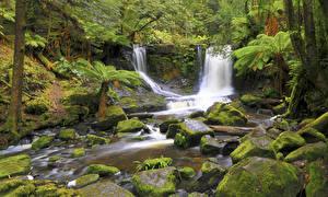 Pictures Australia Forest Waterfalls Stone Moss Horseshoe Falls Tasmania Nature