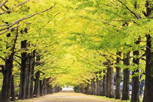 Hintergrundbilder Herbst Allee Bäume Gehweg Natur