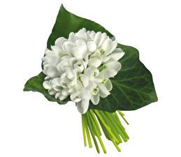 Fotos Sträuße Schneeglöckchen Hautnah Weißer hintergrund Blumen