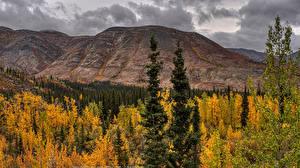 Bilder Kanada Parks Herbst Berg Banff Bäume Natur