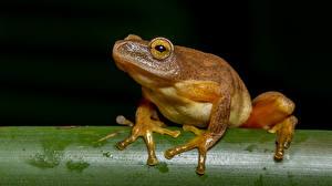 Fotos Hautnah Frosche Pfote ein Tier