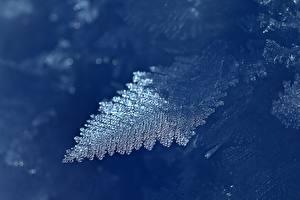 Bakgrundsbilder på skrivbordet Närbild Frost Is vatten Lövverk Natur