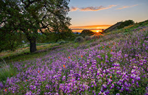 Обои Живокость Рассвет и закат Луга Холм Деревьев Лучи света