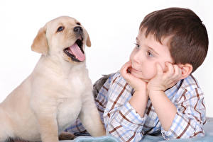 Pictures Dog Golden Retriever White background Boys Puppies Tongue Hands child