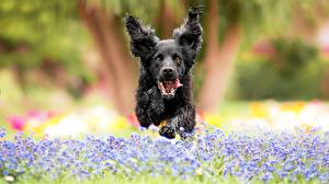 Wallpapers Dog Running Jump Front Blurred background animal