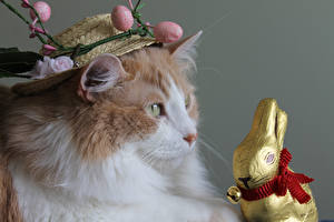 Picture Easter Cats Rabbit Hat Egg Animals