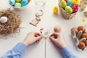 Bilder Ostern Haushuhn Eier Hand