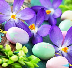 Hintergrundbilder Ostern Krokusse Hautnah Eier Blüte