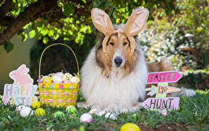 Pictures Easter Dog Collie Wicker basket Egg Rabbit ears English Lettering