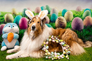 Pictures Easter Dogs Rabbit Collie Egg Rabbit ears animal