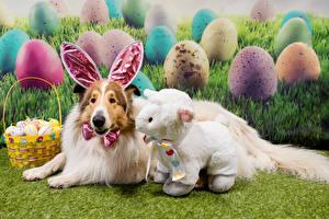 Wallpaper Easter Dogs Sheep Collie Wicker basket Eggs Rabbit ears animal