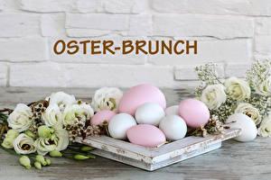 Fotos Ostern Lisianthus Wand Bretter Eier Text Deutsch das Essen Blumen