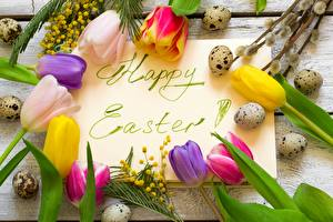 Pictures Easter Tulips Acacia dealbata Eggs Word - Lettering English
