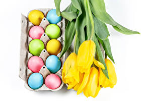 Images Easter Tulip White background Yellow Egg Multicolor flower Food