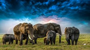 Wallpapers Elephants Cubs Clouds Herd