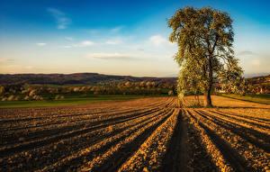 Hintergrundbilder Frankreich Acker Blühende Bäume Hügel Alsace Natur