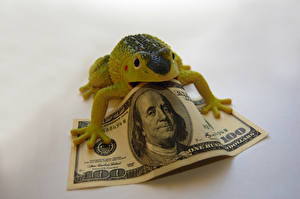 Pictures Frog Toy Money Paper money Dollars 100