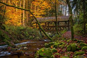 Fotos Deutschland Wald Herbst Stein Brücke Laubmoose Bäche Baden-Baden Natur