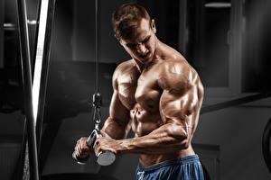 Bilder Mann Bodybuilding Muskeln Hand Trainieren sportliches