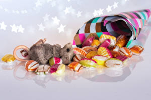 Photo Mice Confectionery Candy Food