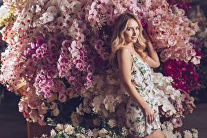 Bilder Orchidee Blondine Blick Kleid Mädchens