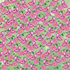 Fotos Gezeichnet Textur Blüte