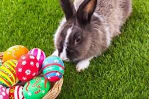 Фото Кролик Пасха Яйцо Трава животное