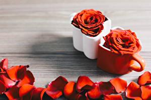 Fotos Rose Becher Blütenblätter Rot