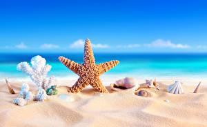 Bilder Seesterne Muscheln Meer Sand