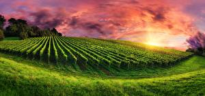 Photo Sunrises and sunsets Vineyard Fields Grass Nature