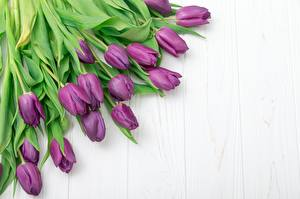 Pictures Tulips Many Violet Template greeting card Flowers