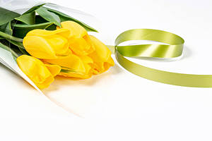 Picture Tulip White background Yellow Ribbon flower
