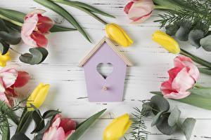 Fotos Tulpen Bretter Herz Blumen