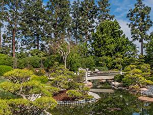 Bilder Vereinigte Staaten Garten Park Brücken Teich Bäume Strauch Earl Burns Miller Japanese Garden Long Beach Natur