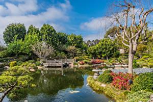Bilder Vereinigte Staaten Garten Teich Brücke Bäume Strauch Earl Burns Miller Japanese Garden Long Beach