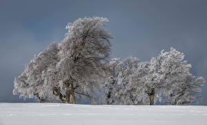 Hintergrundbilder Winter Bäume Schnee Natur