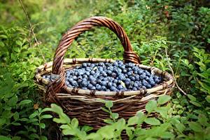 Hintergrundbilder Heidelbeeren Weidenkorb das Essen