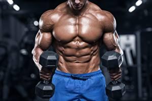 Fotos Bodybuilding Mann Hand Muskeln Hanteln Sport
