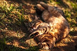 Image Cat Sleeping Resting Paws Laying Alexey Latysh animal