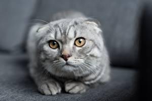 Fotos Katze Blick Unscharfer Hintergrund Tiere