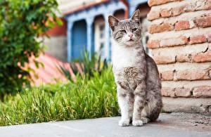 Desktop hintergrundbilder Hauskatze Sitzt Starren ein Tier