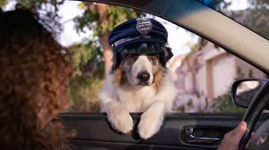 Fotos Hund Der Hut Polizei Lustige Fenster ein Tier