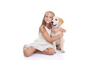 Pictures Dogs White background Little girls Sitting Staring Retriever Hugs Children Animals