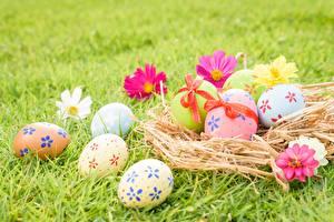 Bilder Ostern Eier Gras Nest