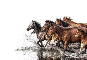 Pictures Horses Water Running Water splash White background animal